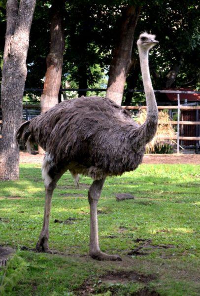 Анталийский зоопарк (Antalya Zoo)
