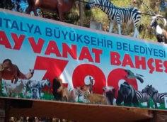 Зоопарк в Анталии: на карте, как добраться, режим работы, цена и отзывы туристов