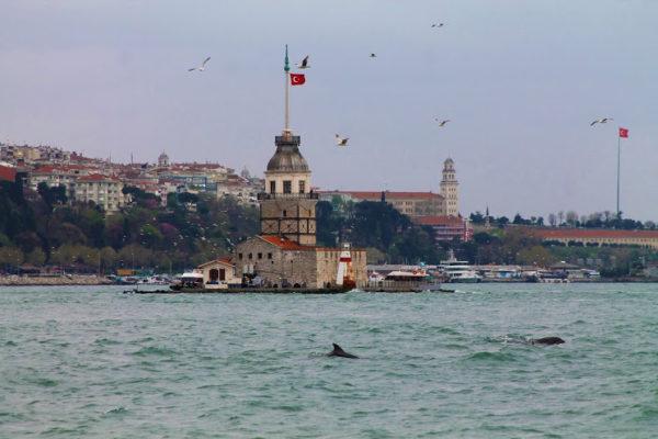 миграция дельфинов